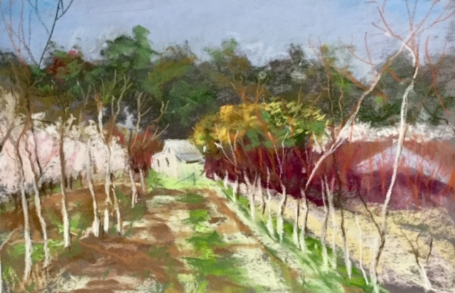 The orchard, Karragullen
