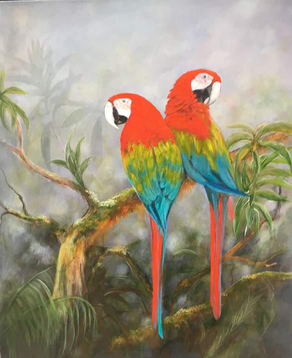 Rainforest Macaws